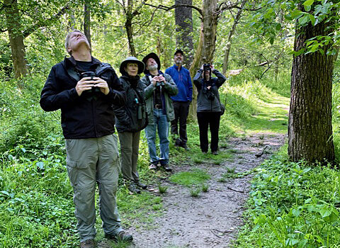 Banshee Reeks Bird Walk