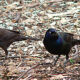 Unknown Disease Affecting Local Birds