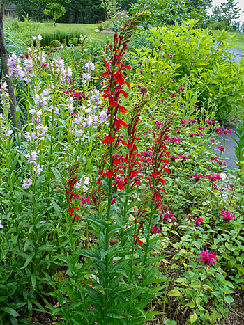 Front Yard landscaping with native plants