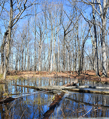 Vernal pool in woods