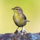 Birding Off the Beaten Path: A Walk Through Olde Izaak Walton Park