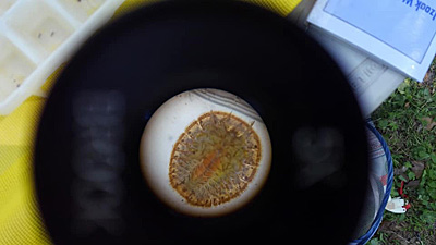 Water Penny in Magiscope