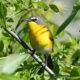 Raven Loonatics' Birdathon Is a Windy Affair