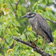 Shrike Force Finds 113 Avian Species, a River Otter, a Beaver and a Monarch butterfly