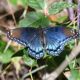 Butterfly Walk at Willowsford