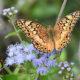 Birds, Butterflies and Dragonflies at JK Black Oak Wildlife Sanctuary