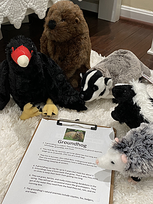Stuffed animals at summer camp