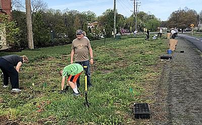 Harrison Street meadow planting