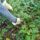 Keep Trying! The Rewards of Fighting Woodland Invasives