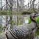 'Say Cheese': Animals at JK Black Oak Smile for Trail Cameras
