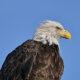 The Dulles Greenway Installs Live-stream Bald Eagle Camera at the Dulles Greenway Wetlands