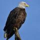 Birding the Dulles Greenway Wetlands
