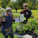 Behind the Scenes at the Native Plant Sale