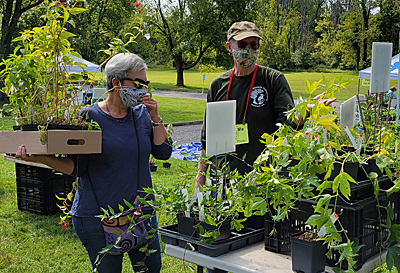 Giving advice on native plants