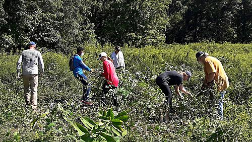 Volunteers work in meadow